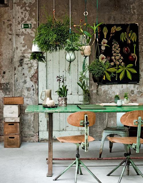 Botanical - planten-in-huis