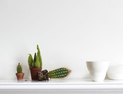 cacti feature